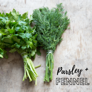 bunch of parsley and fennel fronds